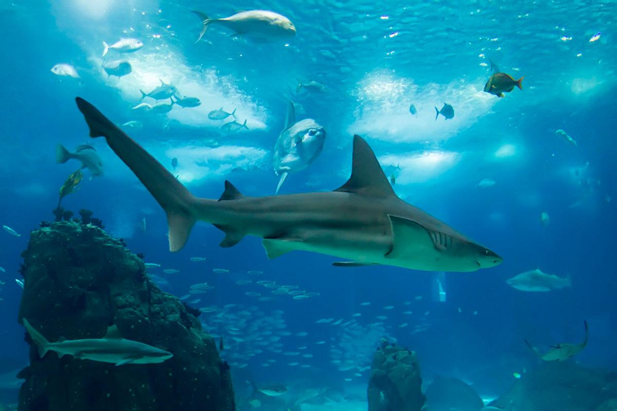 бы, хрупкая фотографии акул высокой четкости могут