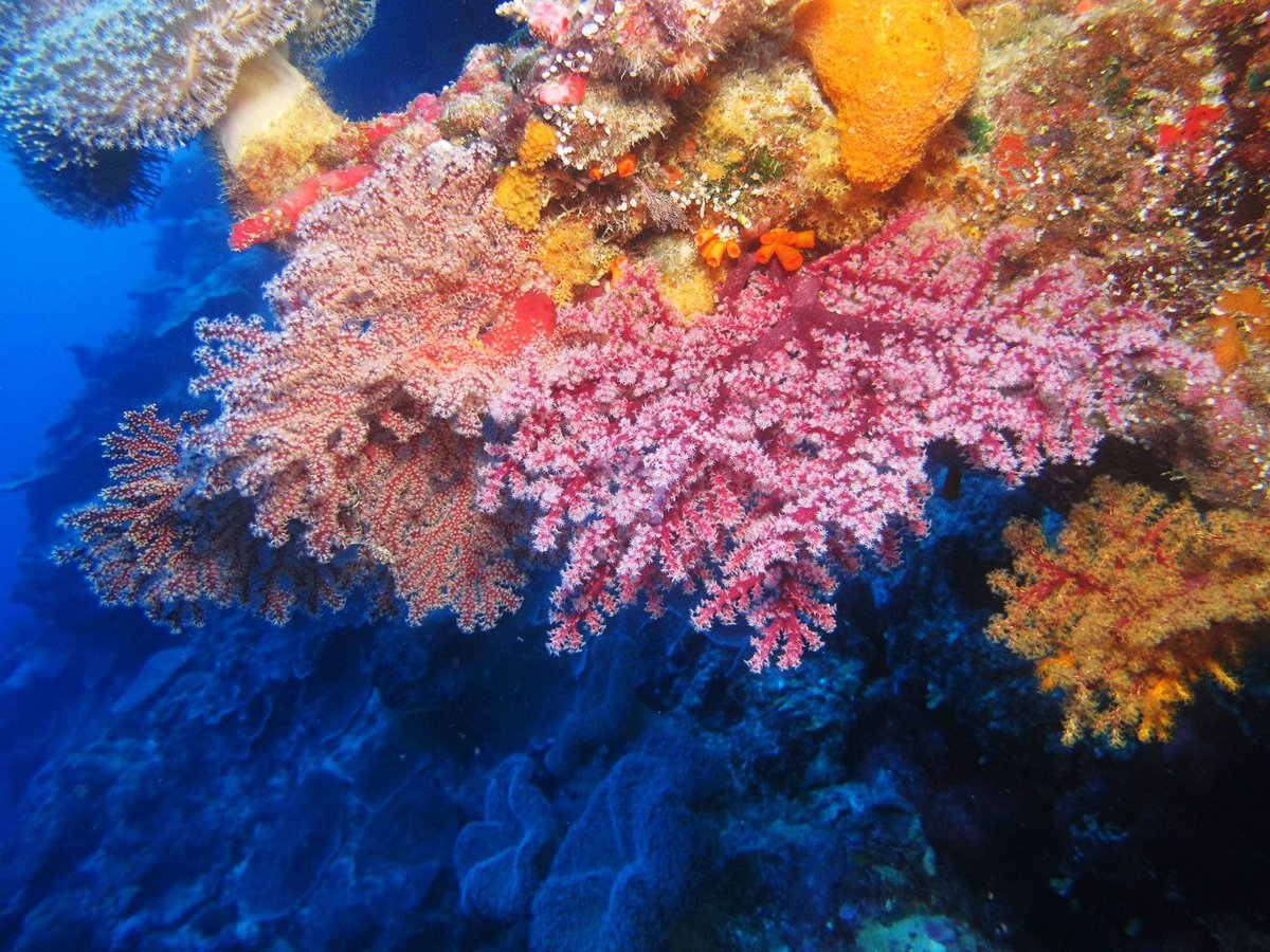 Картинки про рифу