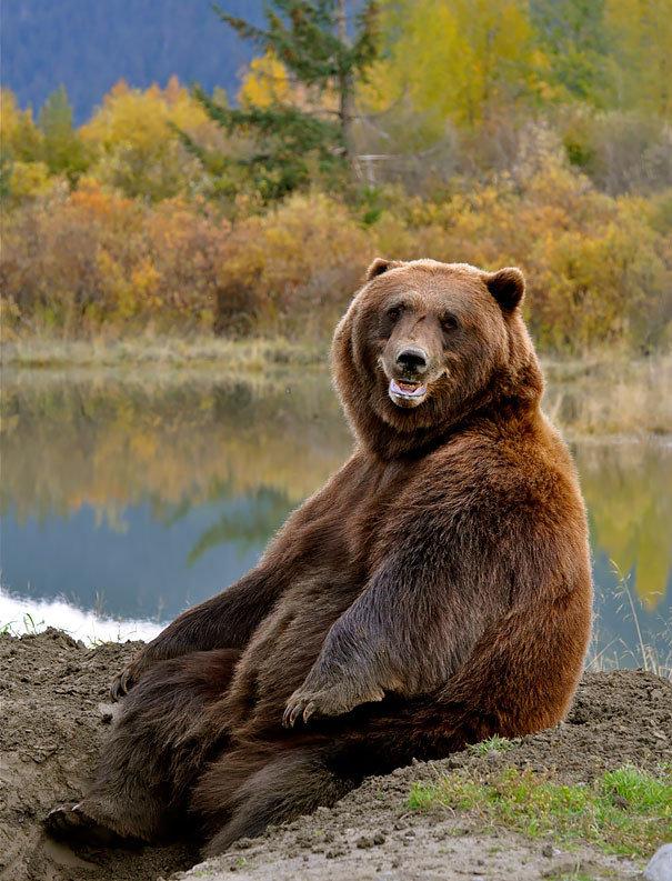 Для, картинки с медведями смешные