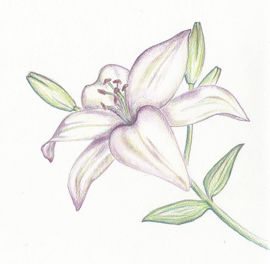 Вход, лилии рисунок