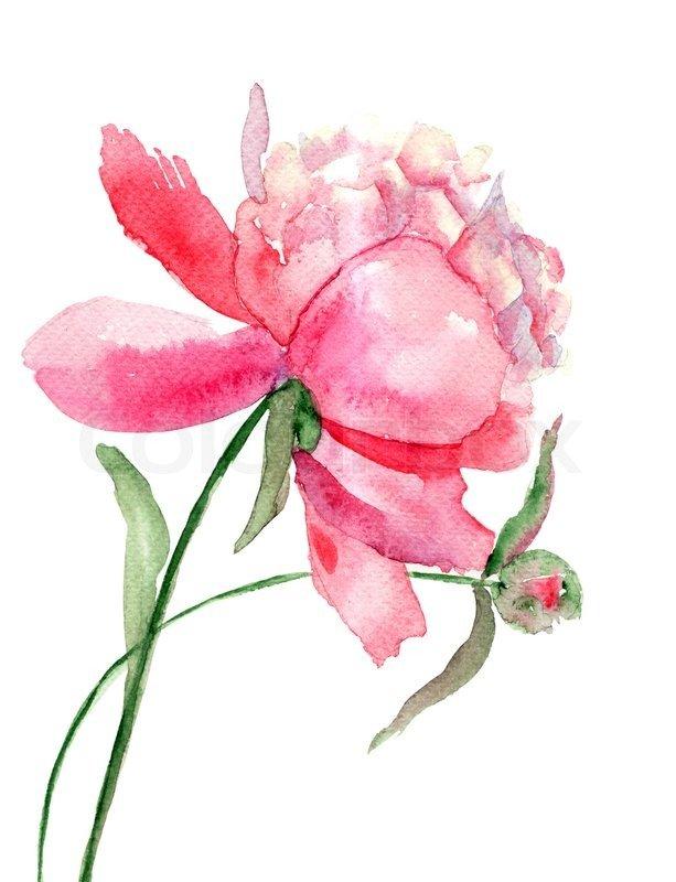 Цветок пион на открытку, поздравлением мая