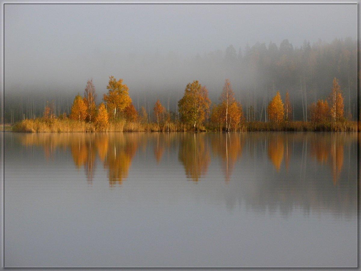 Красота России#fall #деревья #небо #осень #отражения #пейзаж #природа #туман
