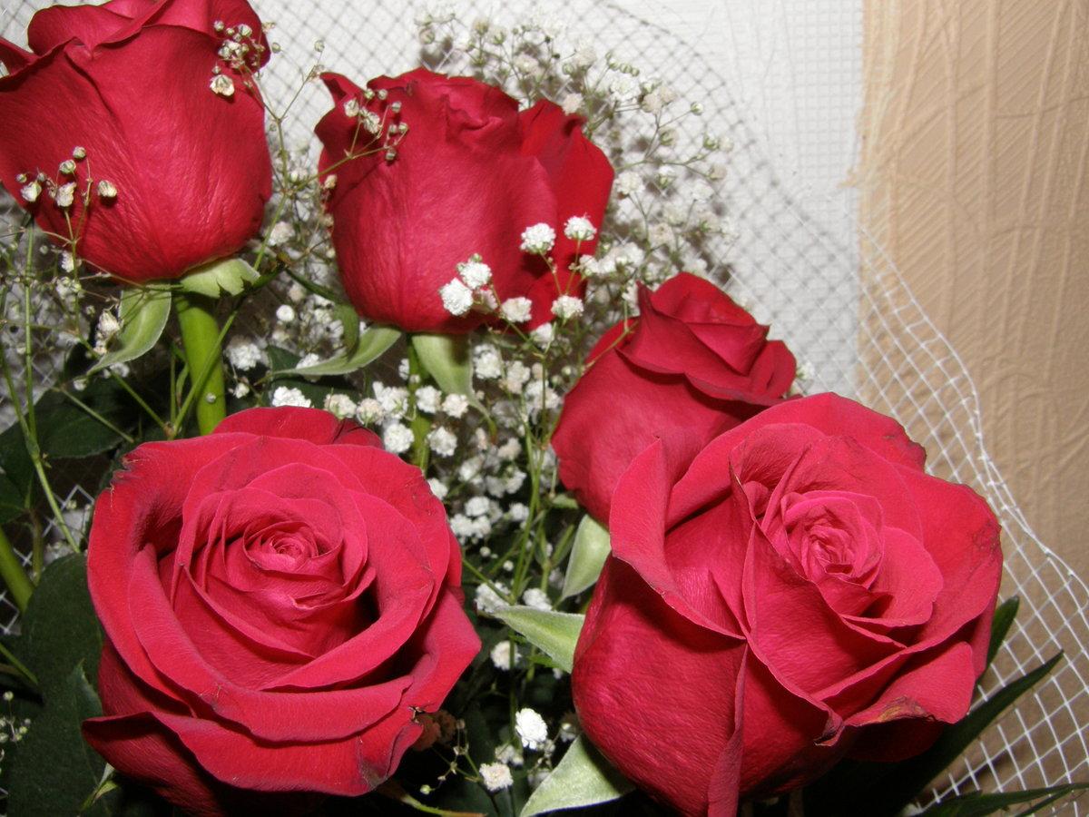 Картинки красных роз на каплях воды видим