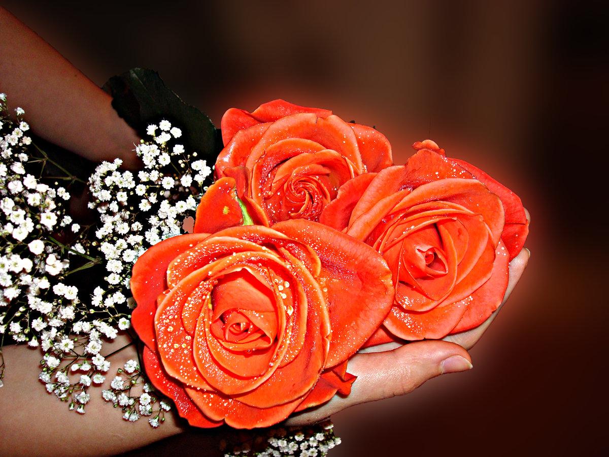 Красивые розы для любимой картинки