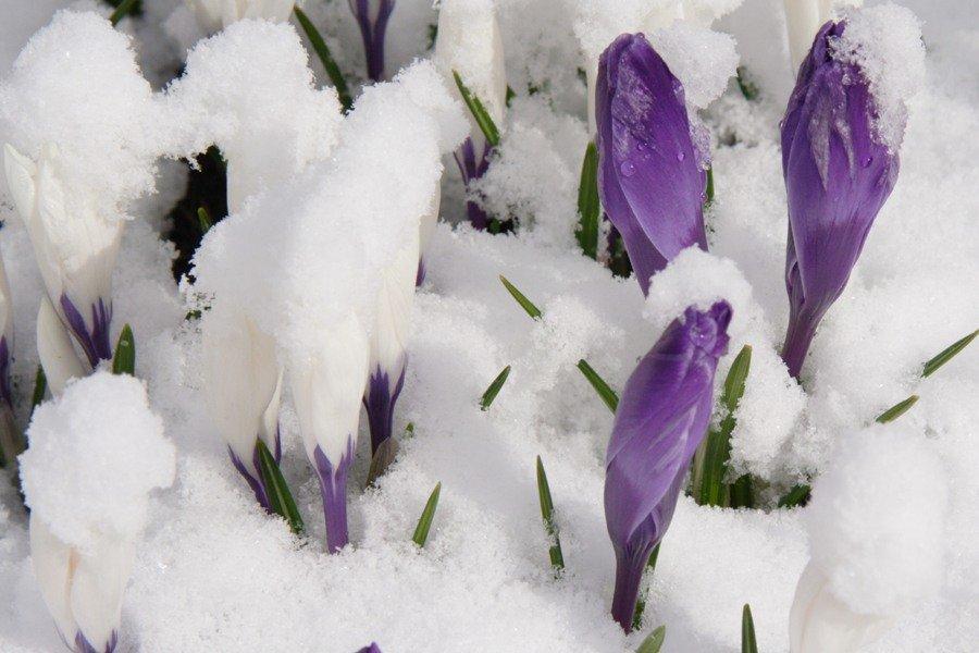 Цветы зимой картинки для детей
