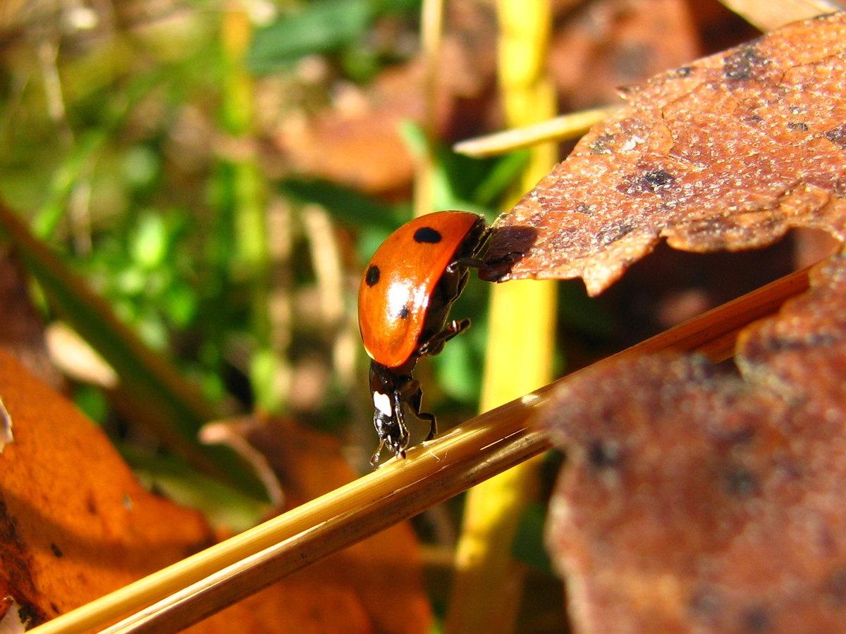 Картинка насекомых осенью