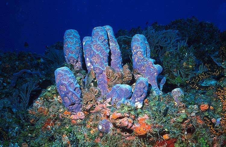 Губки фото картинки биология