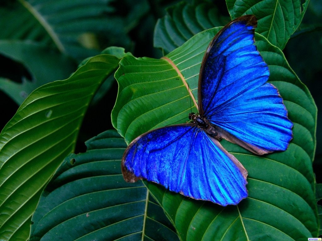 Картинки с изображением бабочек