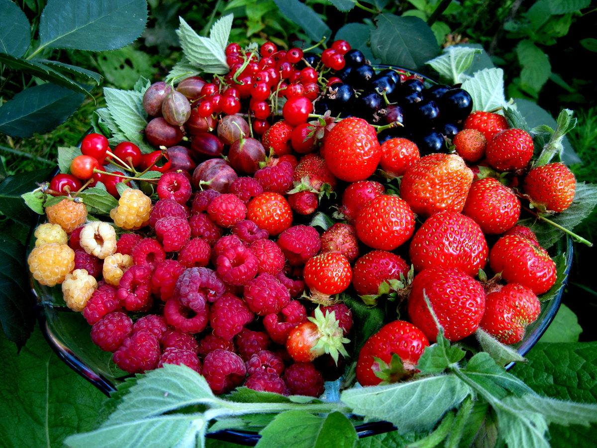 летние ягодки картинки