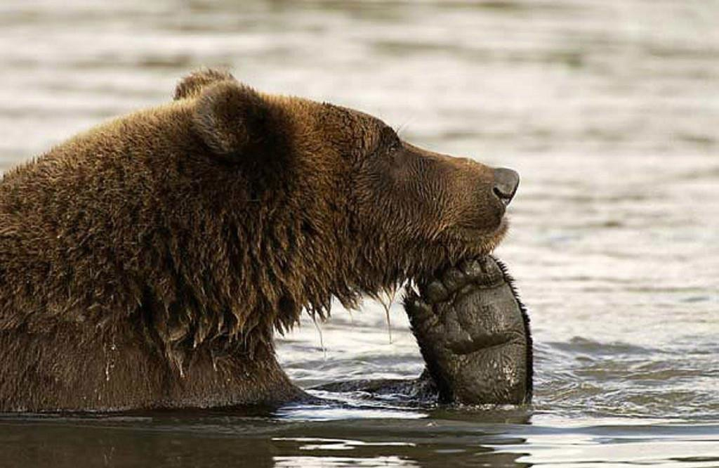 Очень смешной медведь картинки