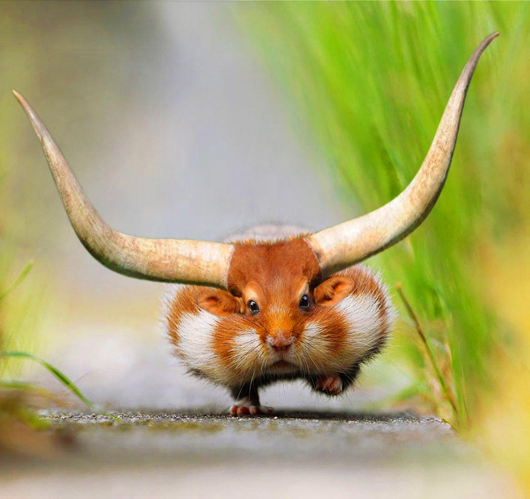 Смешные животные фотошоп, маша