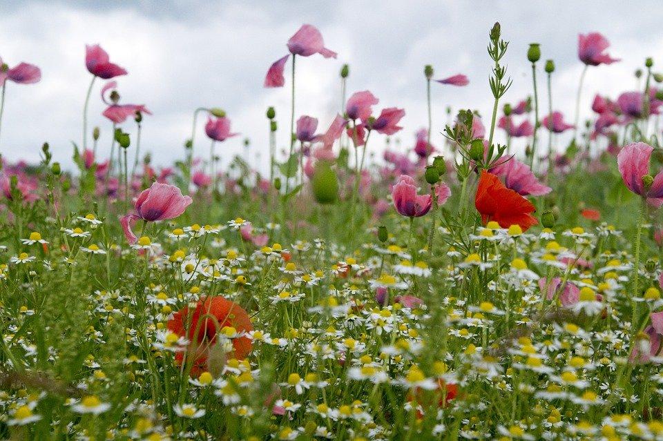 Цветы г луга опт, база цветов