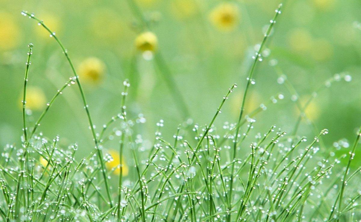 картинки лето природа роса фото