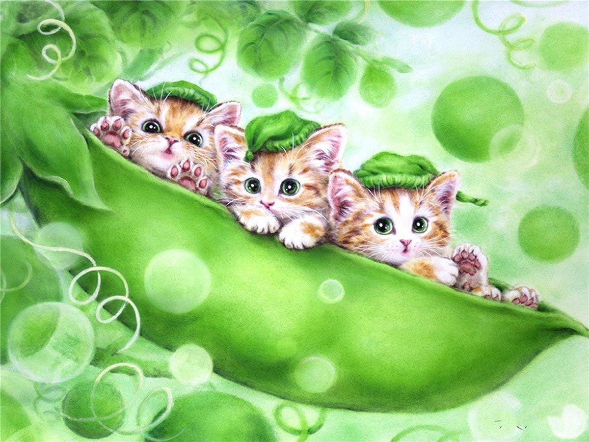 Детские открытки с кошками, приколами про