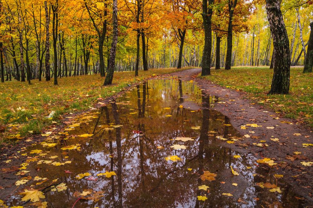 Картинки дождь осенью, окончание вуза