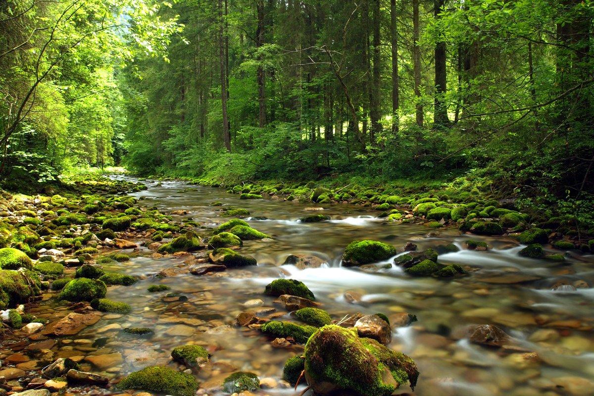 интернет-каталоге сайте красивые картинки лес речки плюс