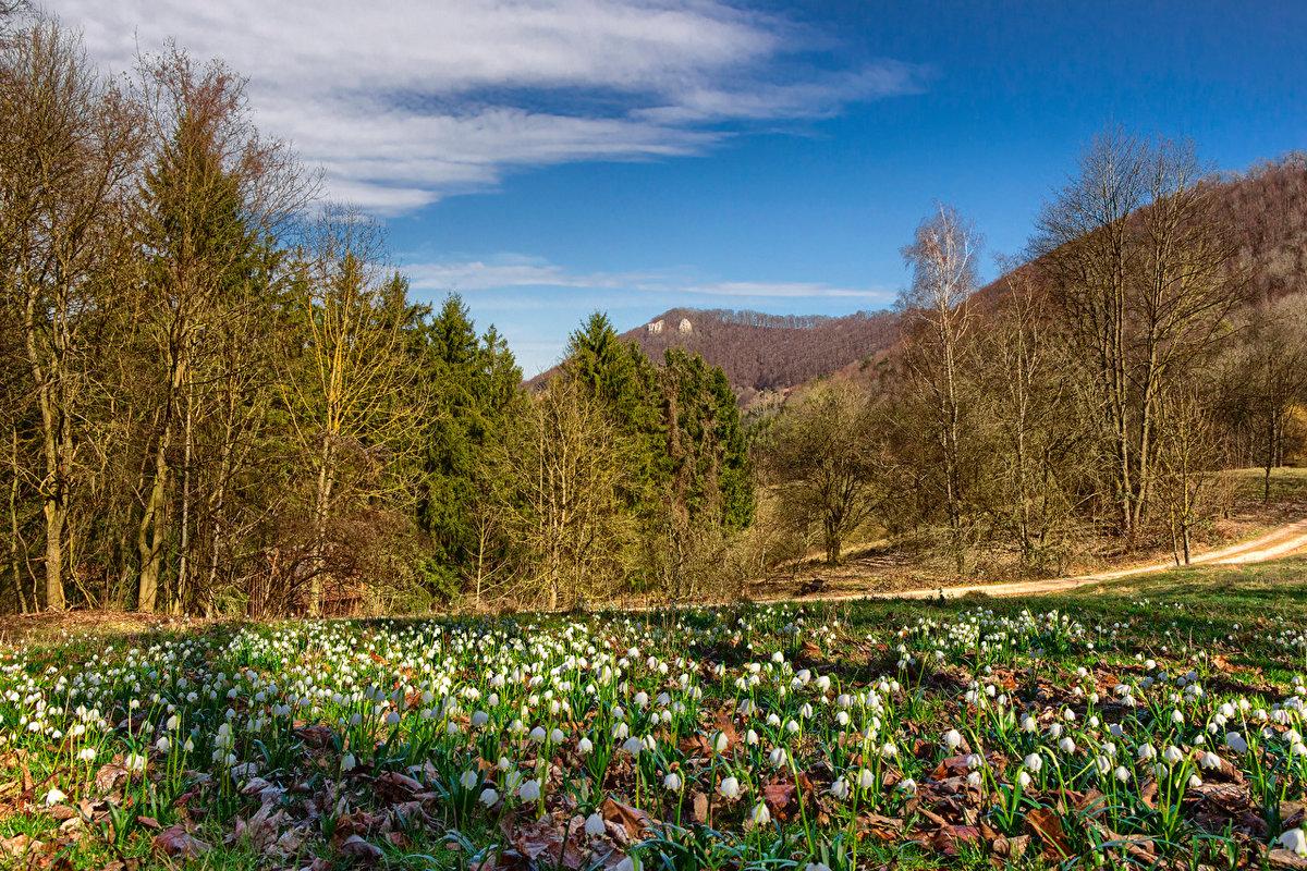 фото весеннего леса с подснежниками думаете, какая этих