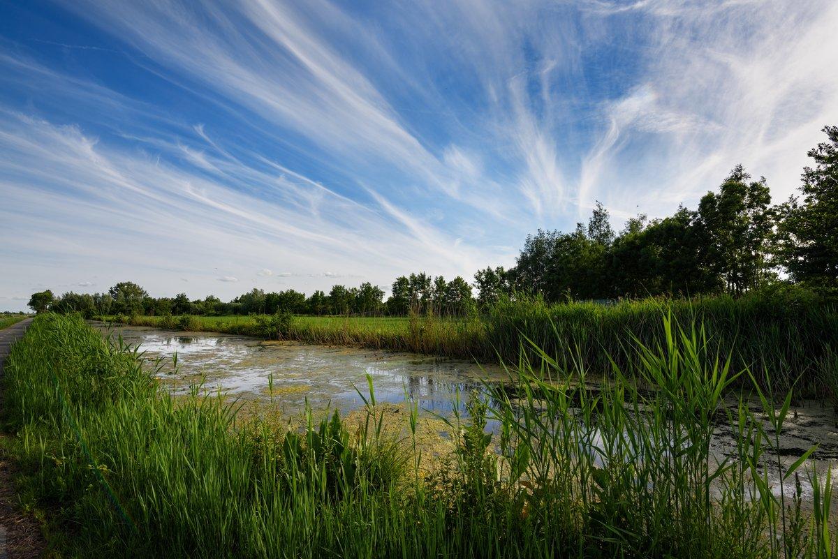 фото камыши на реке пейзаж бизнес крестьянско-фермерское