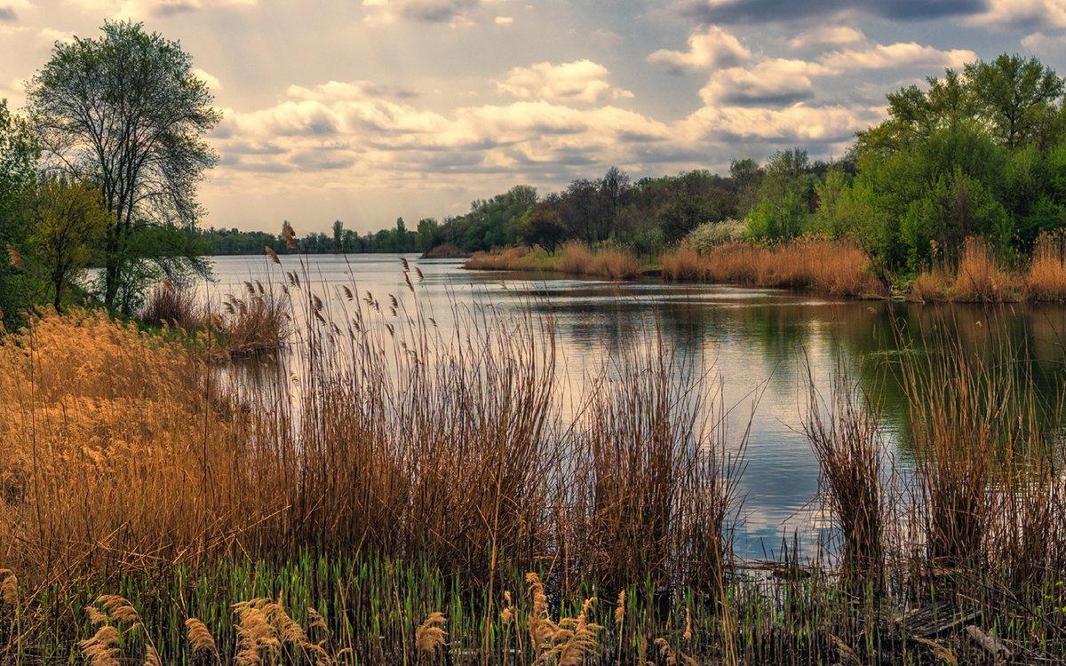 интерес фото камыши на реке пейзаж соответствуют стандарту коричневые