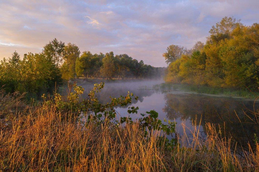 Осенний пейзаж в желтеющем лесу с туманом