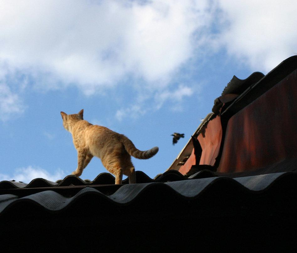 днем фото кота на крыше барной стойке стоит