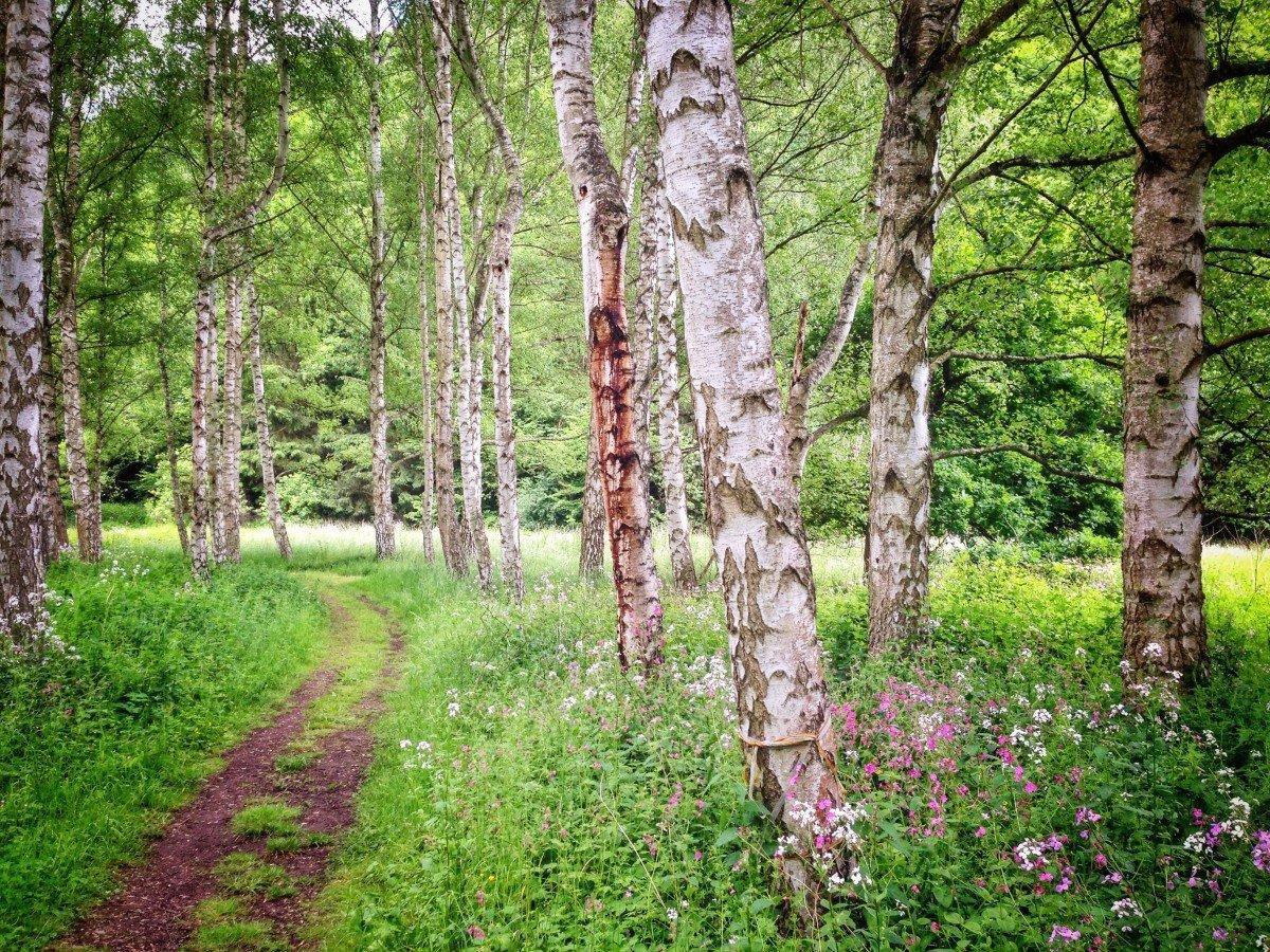 активная двухполосная русский лес летом фото гостиница имеет все