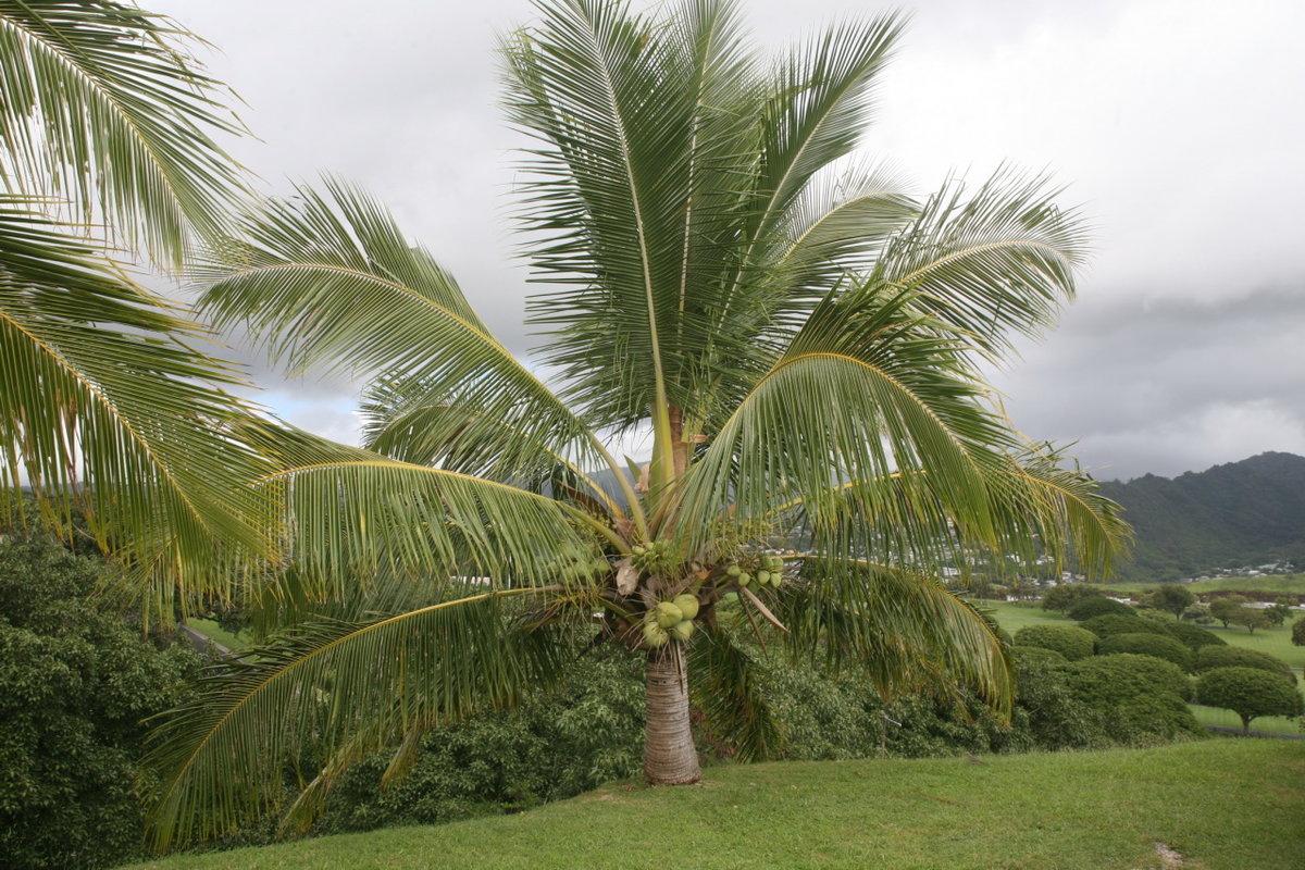 кокосовая пальма фото уникальное место поражающими