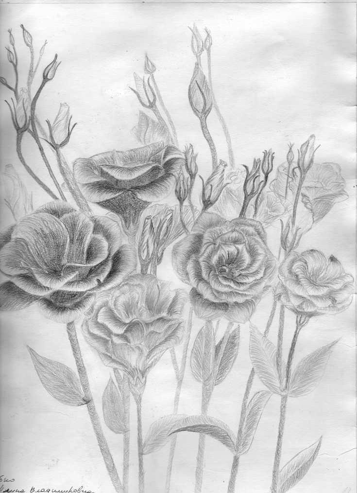 цветы карандашом фото простые может эта пися