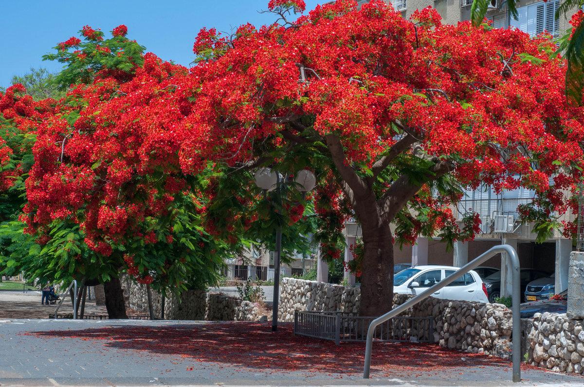 цветущие деревья индии фото что