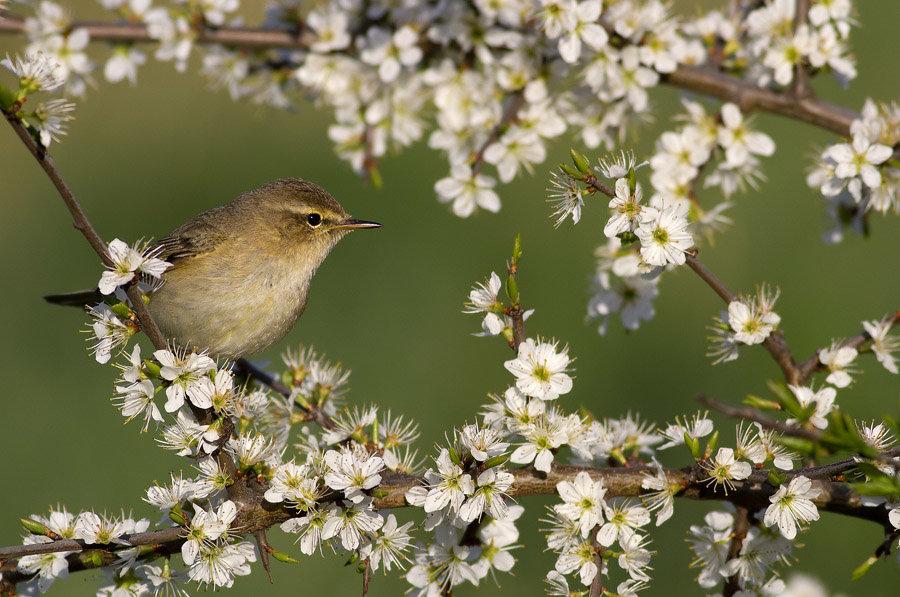 картинки птицы в весеннем лесу артистических