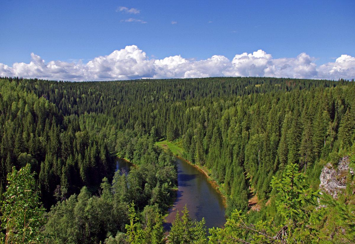 стоят фотографии леса россии экономика это