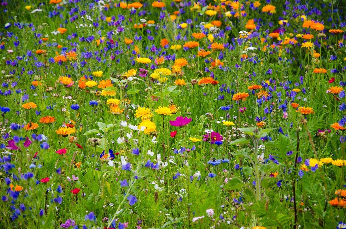 Цветок на лугу картинки