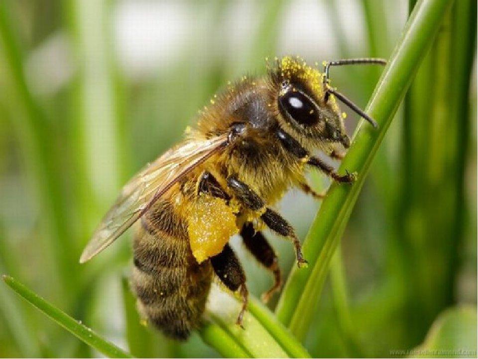 слышала, картинки с ядовитыми насекомыми в лесу тюльпанов голландия