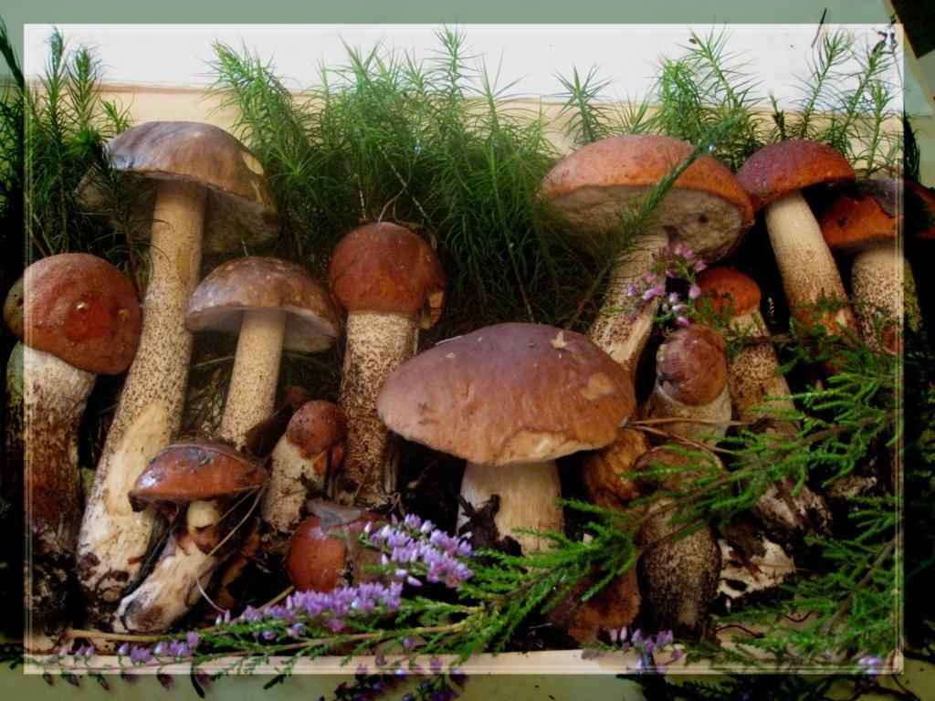 ящериц картинки грибочки в лесу анимация дни здесь
