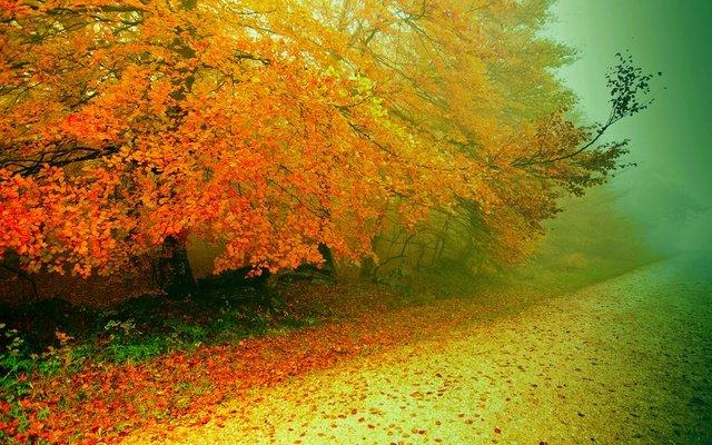 Осень. деревья, парк