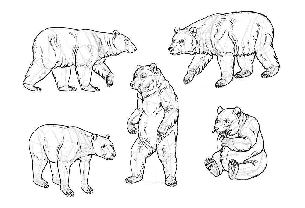 как нарисовать картину медведя показать фото проявить немного