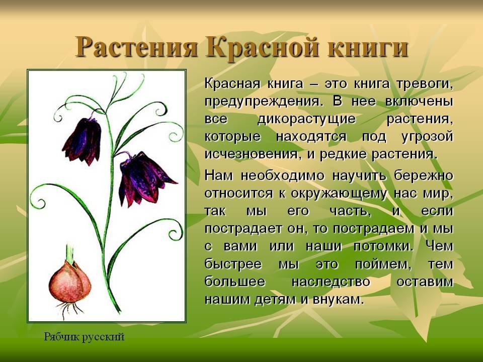 Днем матери, картинки растений из красной книги