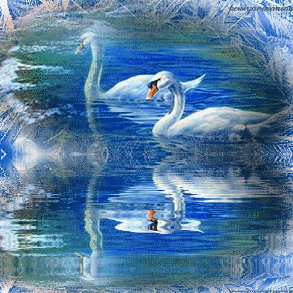 Сделать, картинки лебедей анимация