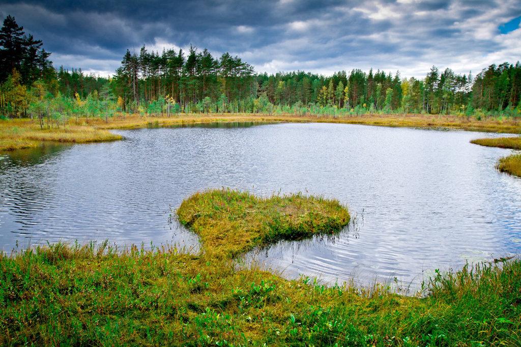 Картинки о природе курганской области
