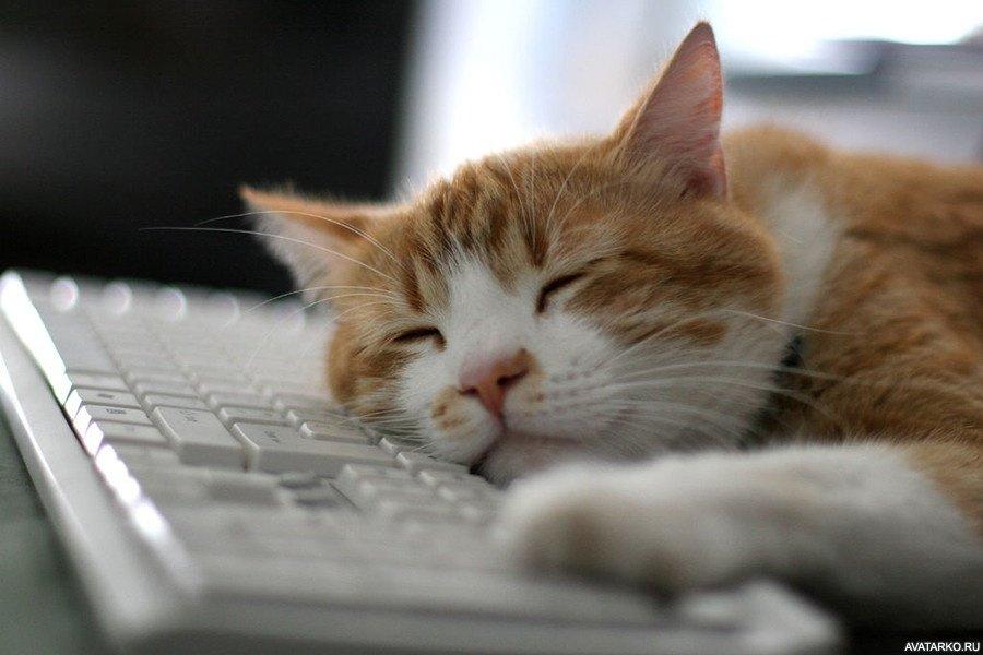 Открытки днем, прикольная картинка спящего