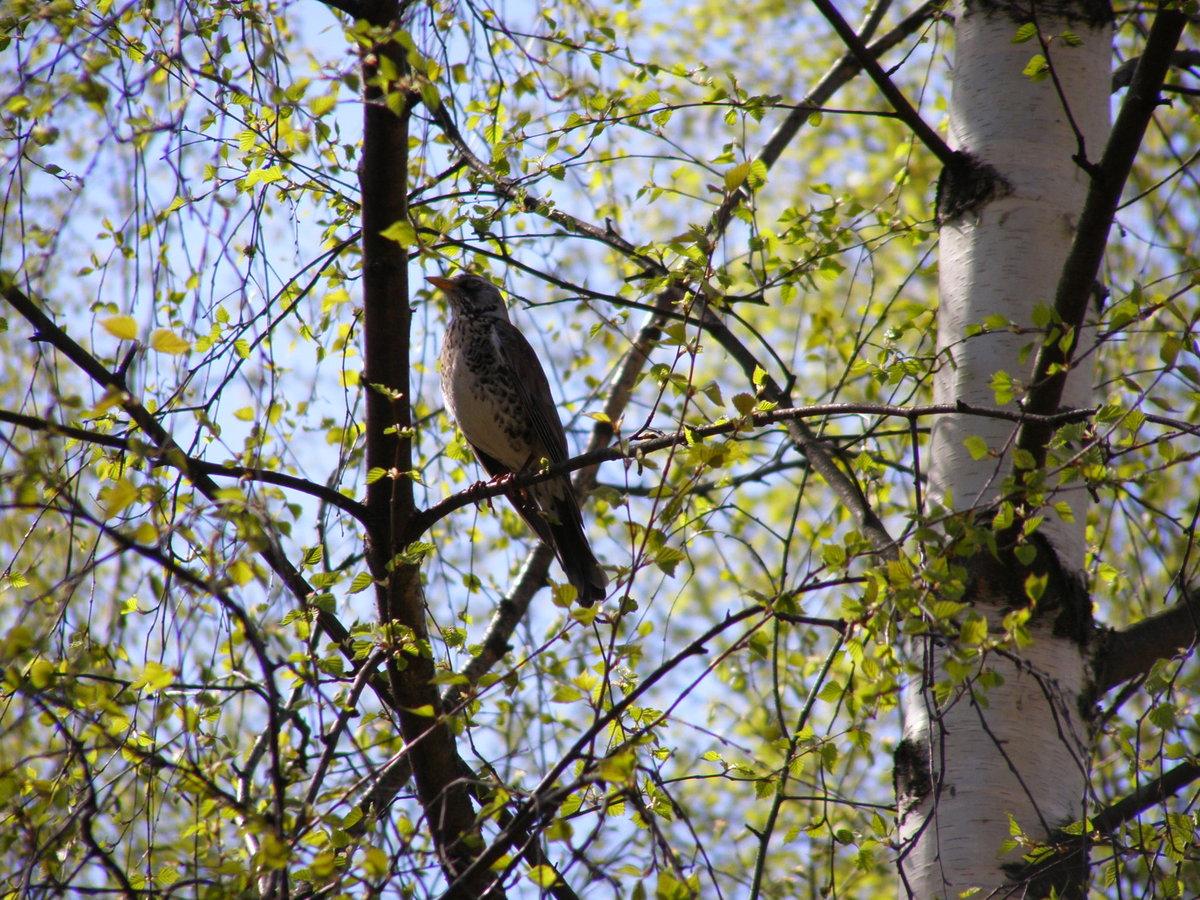 это время картинки весенний лес с птицами отбором