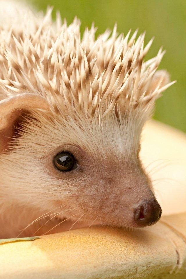 Фото смешных животных сайты