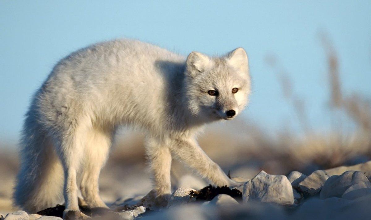 Картинки животный мир тайги