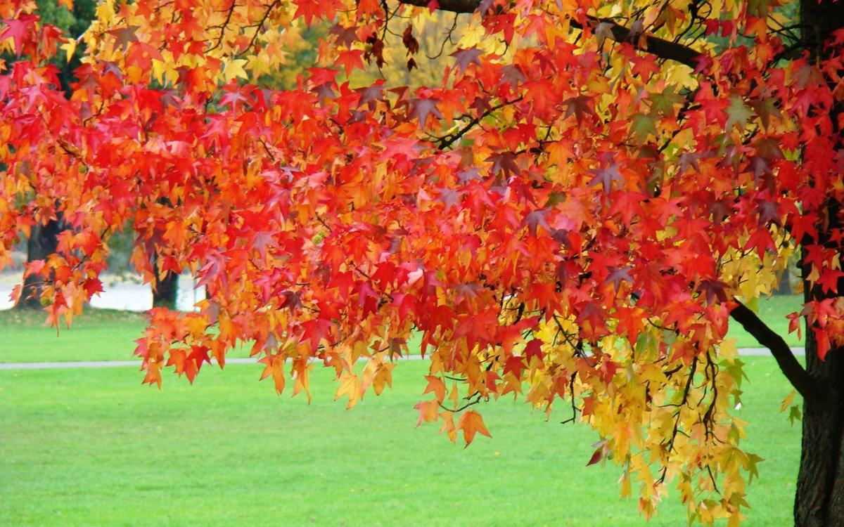 Картинка сентябрь природа для календаря