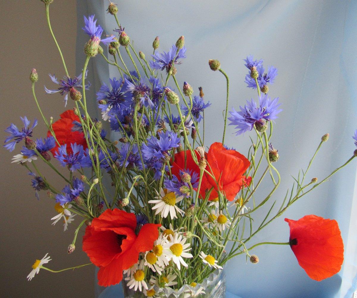 Открытки полевые цветы красивые