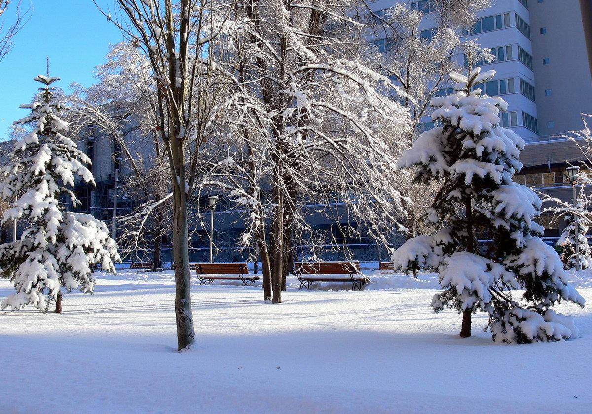 фрезии картинки зима в нашем городе этой