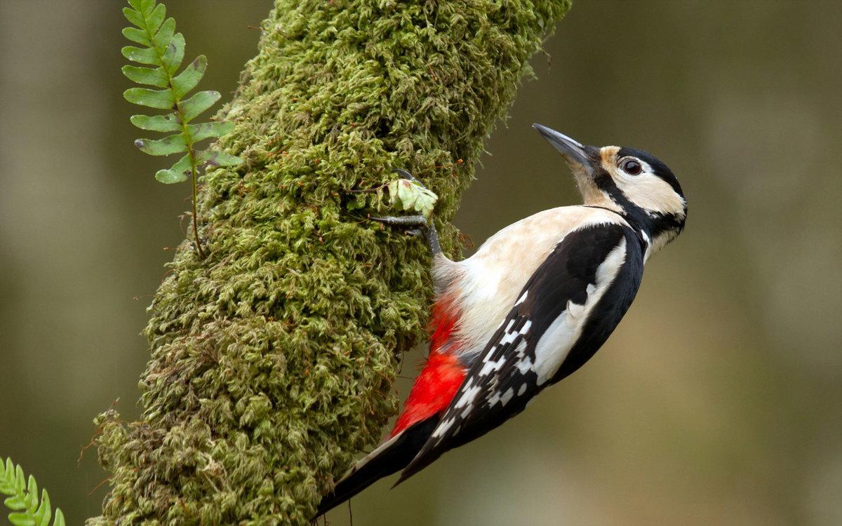 Картинки природа животные птицы, улитки