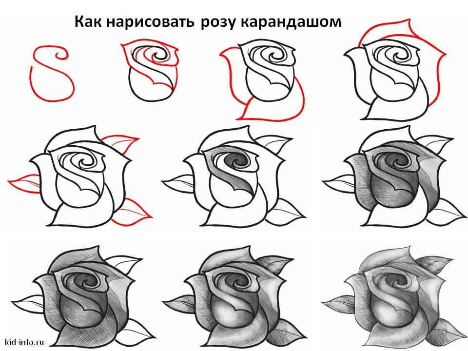 Днем святого, картинка как нарисовать розу