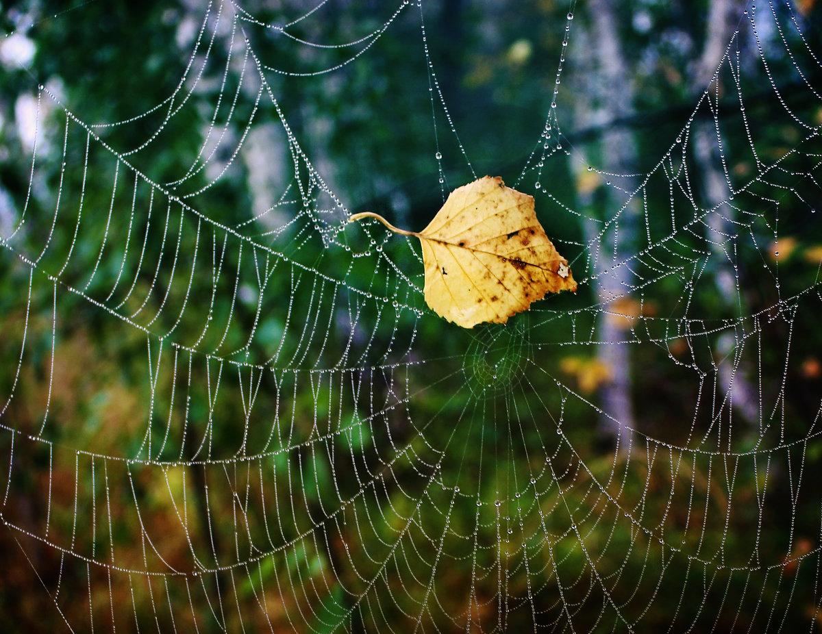 Картинка паутина бабьего лета
