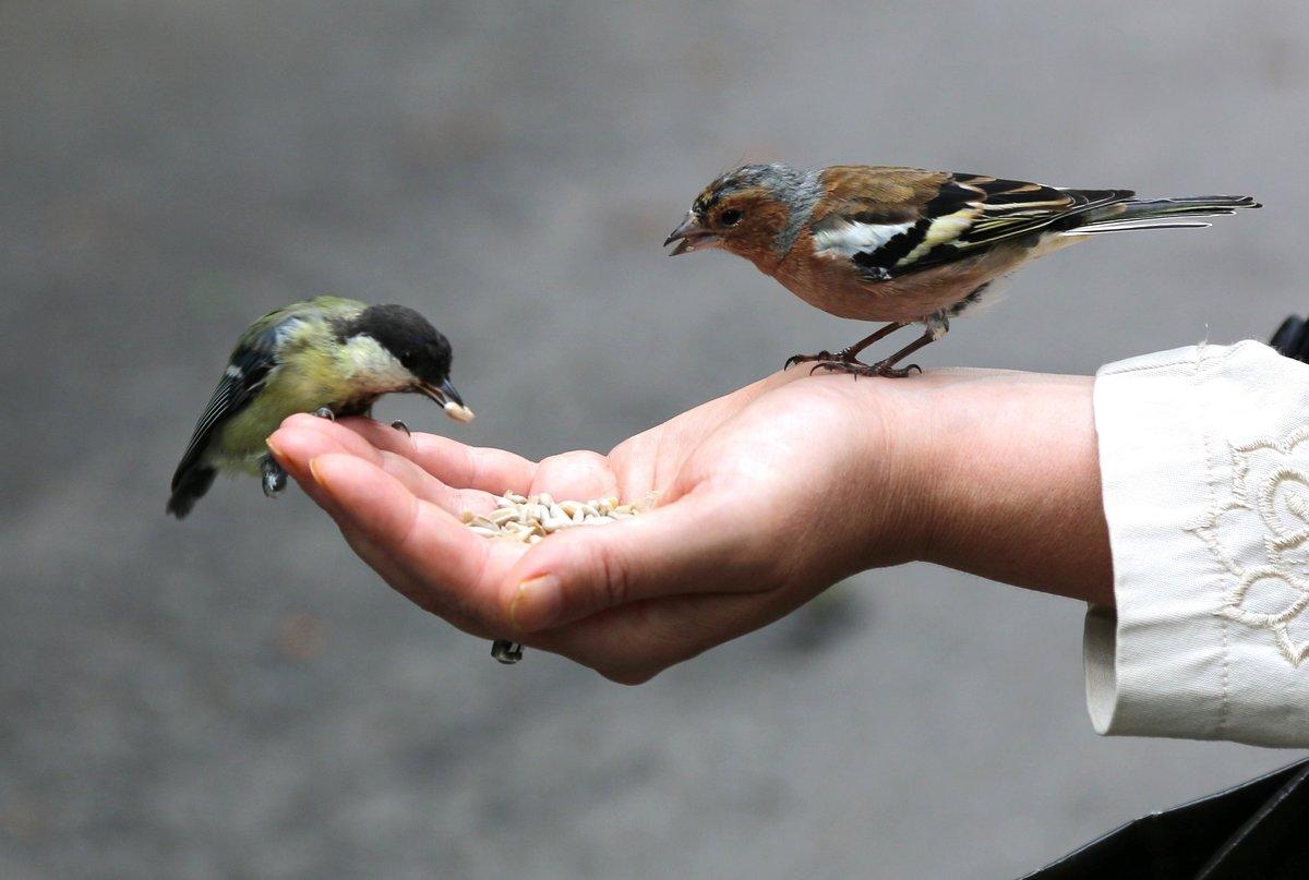 что покормить птицу картинка орех сорта